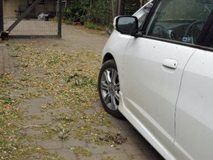 pollen and tree litter surround the car