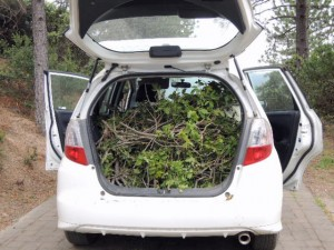 Tree debris packed into the back of the car.